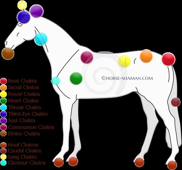 Whip clipart horse whip. Equine chakras part shaman
