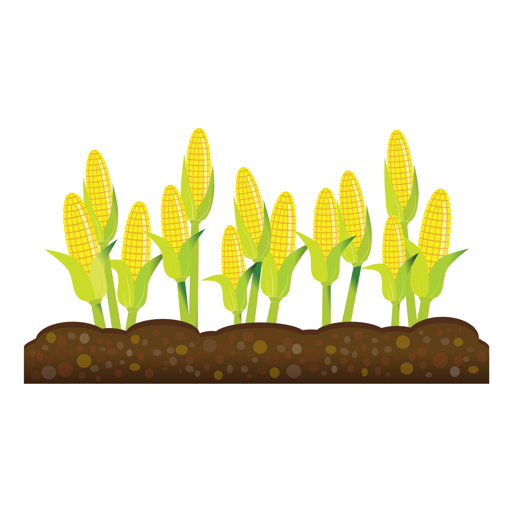 Feilds barn free on. Clipart tree corn