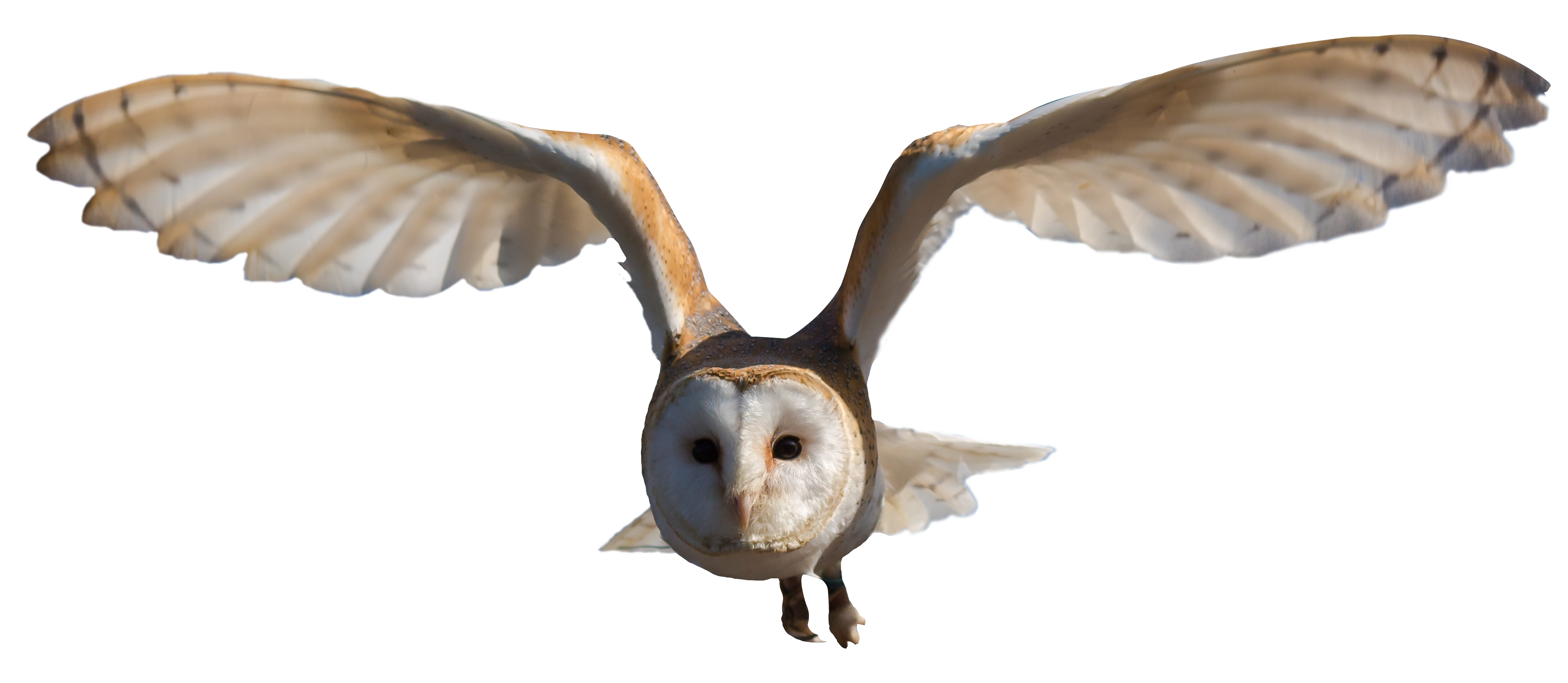 Clipart barn transparent background. Snowy owl free on