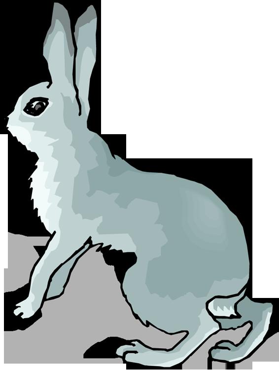 Bunny wild rabbit