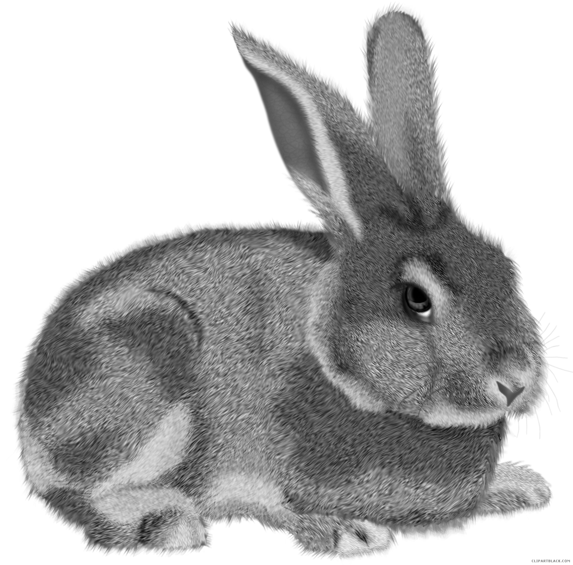 Hamster clipart grey. Rabbit animal free black