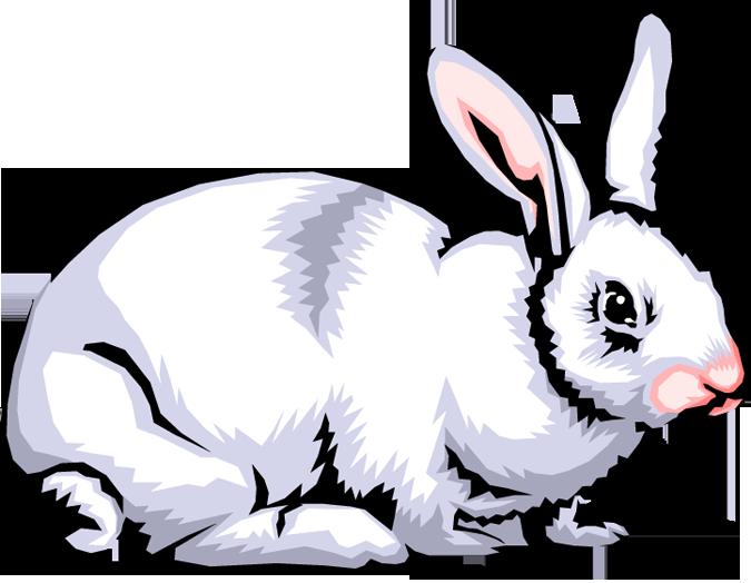 rabbit clipart images rabbit clip art images clipart panda free