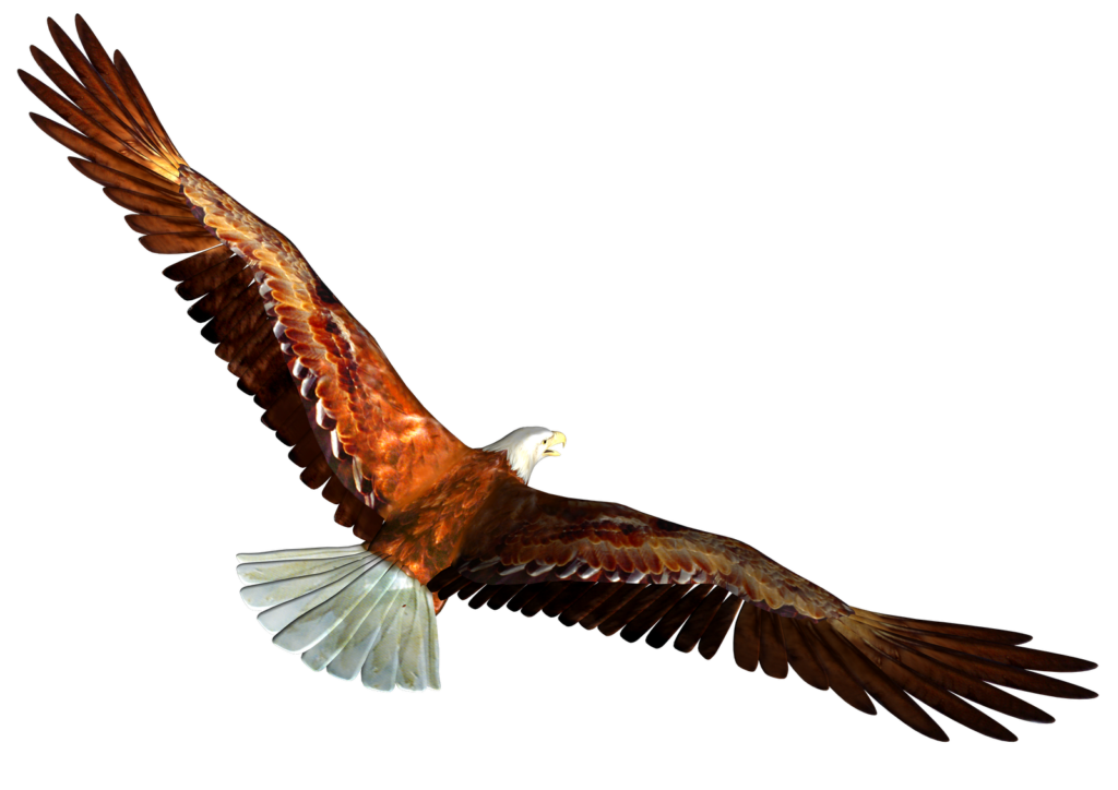 Kite clipart vector. Soaring eagle png peoplepng
