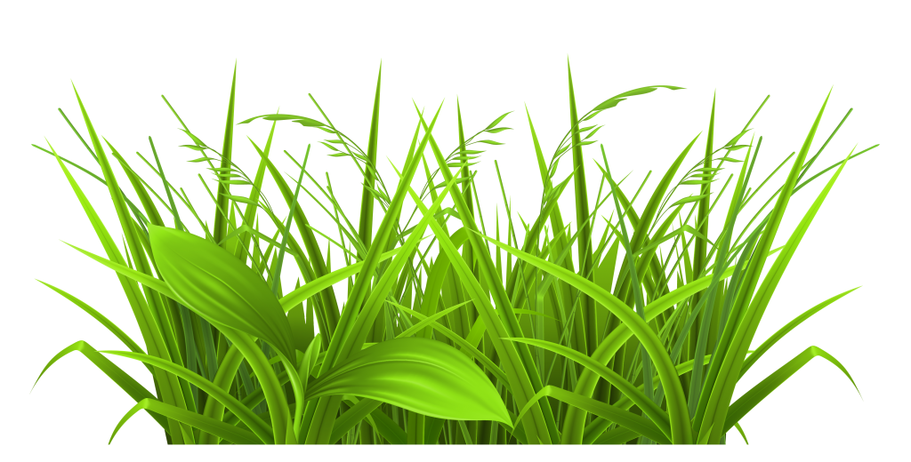 Clipart grass vector. With beautiful poppies png