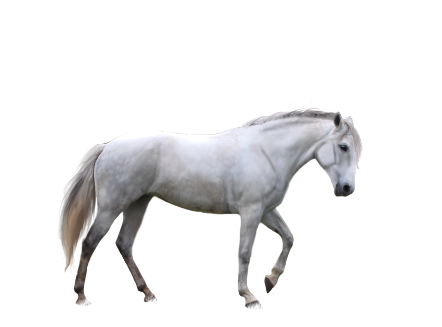 Horses clipart dog. Free download of horse