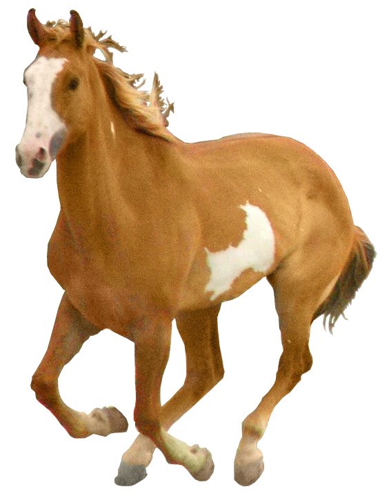 Images best free icons. Horse clipart domestic animal