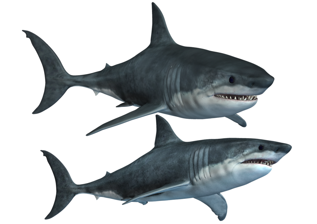 Png photos peoplepng com. Clipart football shark