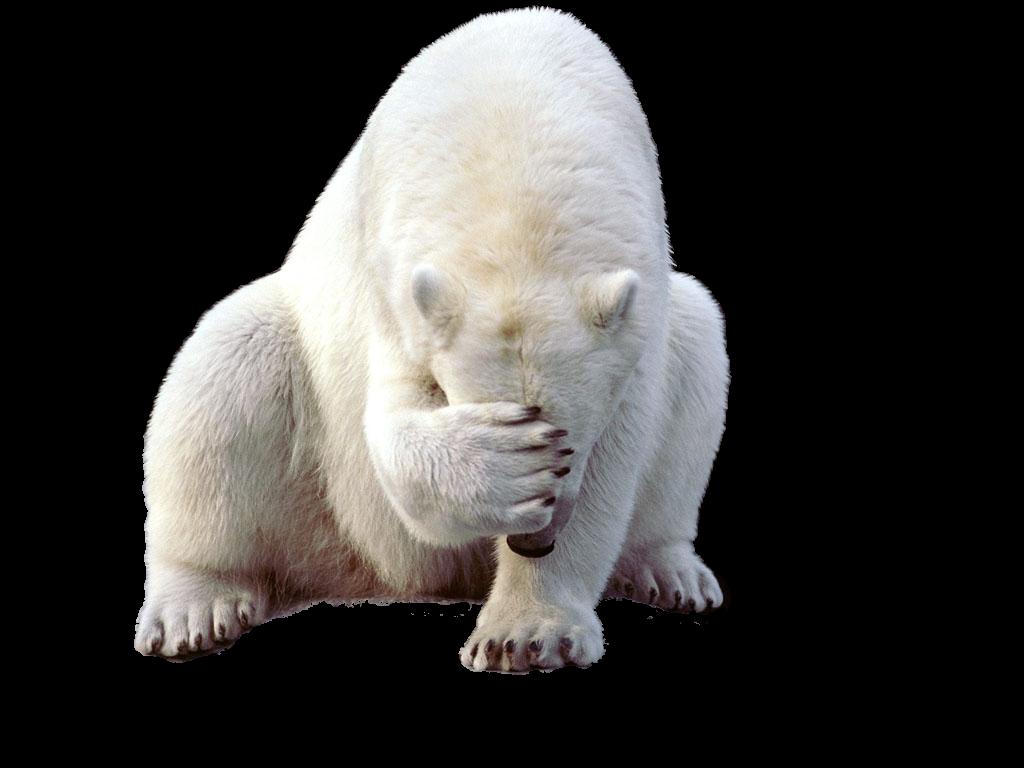 Png peoplepng com. Clipart bear polar bear