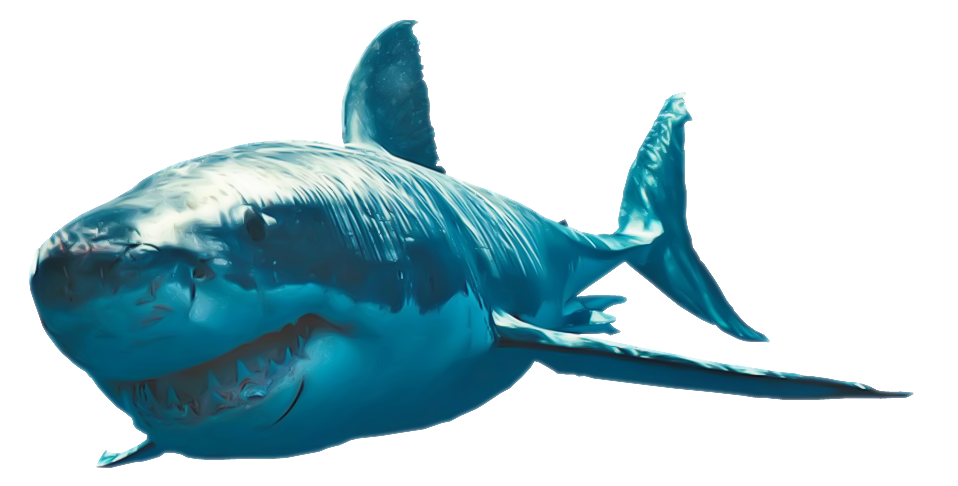 Download hq png image. Clipart shark shark swimming