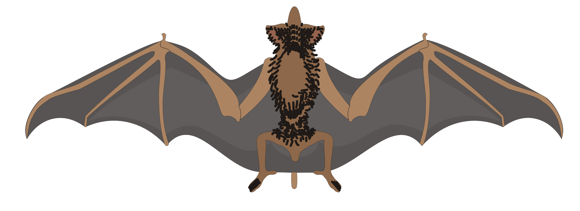 Clipart birds bat. Learn about nature free