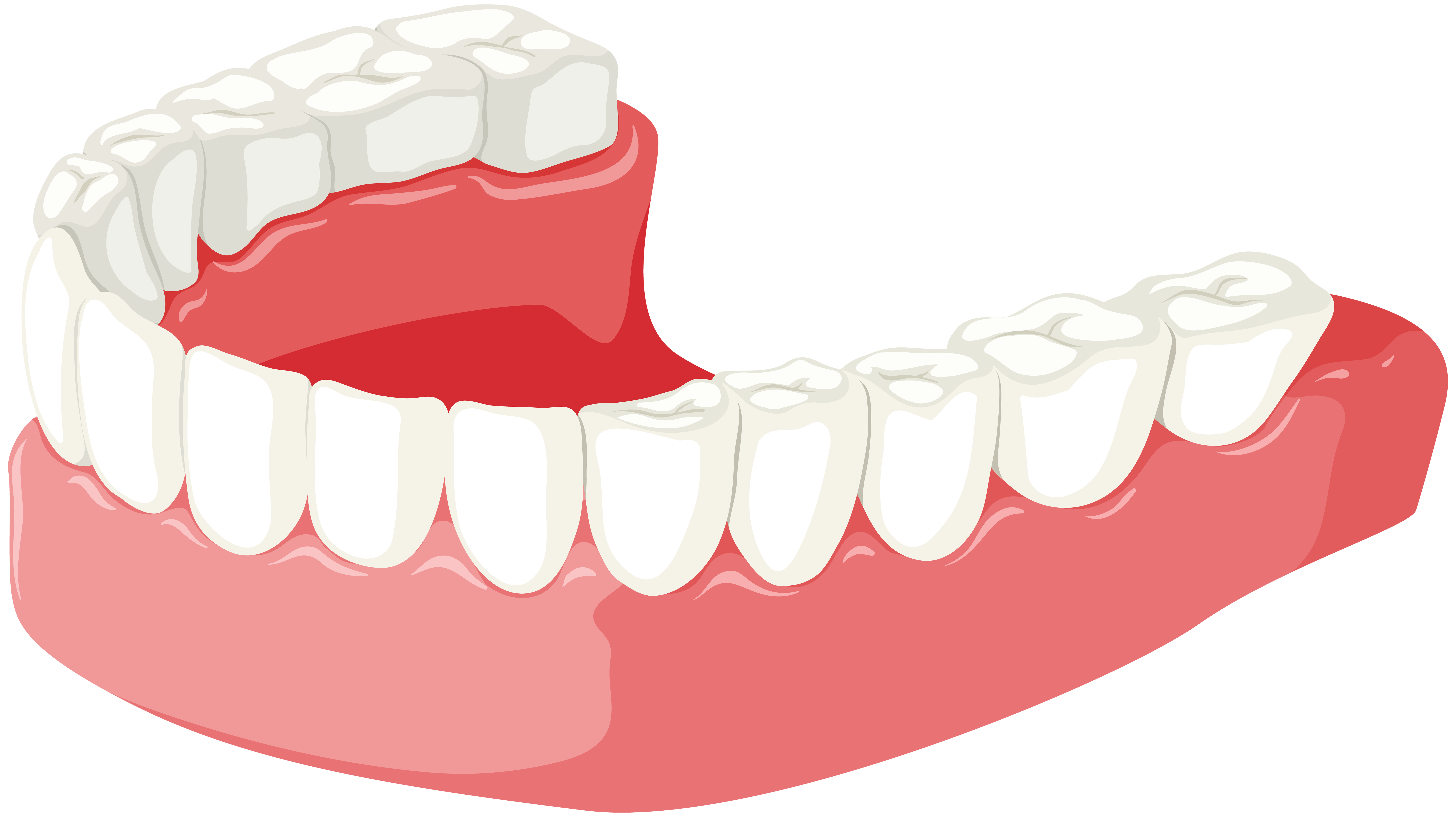 Lower jaw png clip. Dog clipart dental