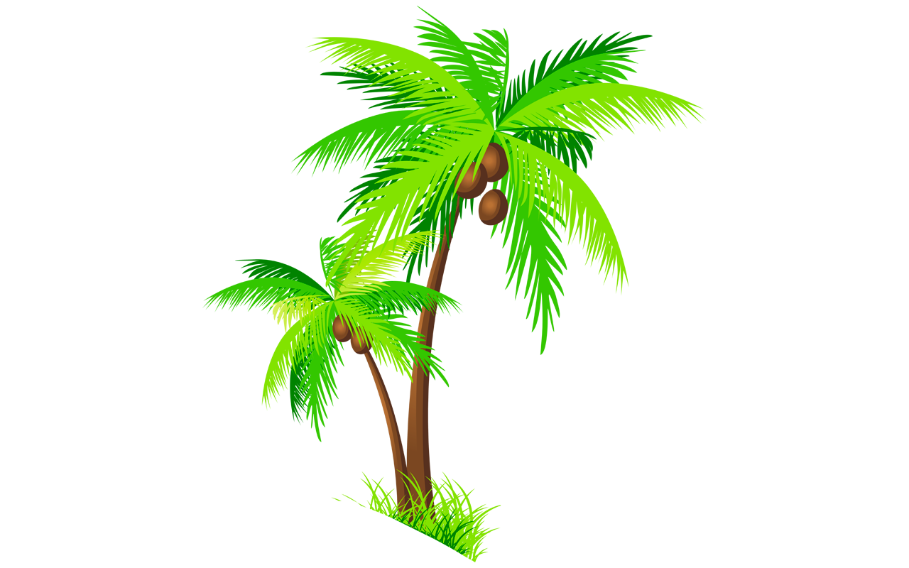 Clipart trees buko. Coconut palm tree drawing