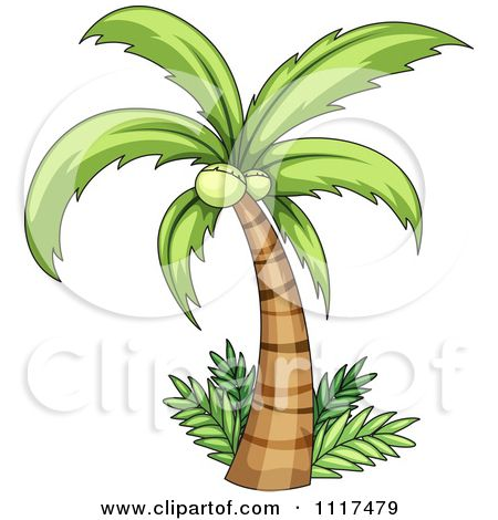 Vector palm and ferms. Tree clipart coconut
