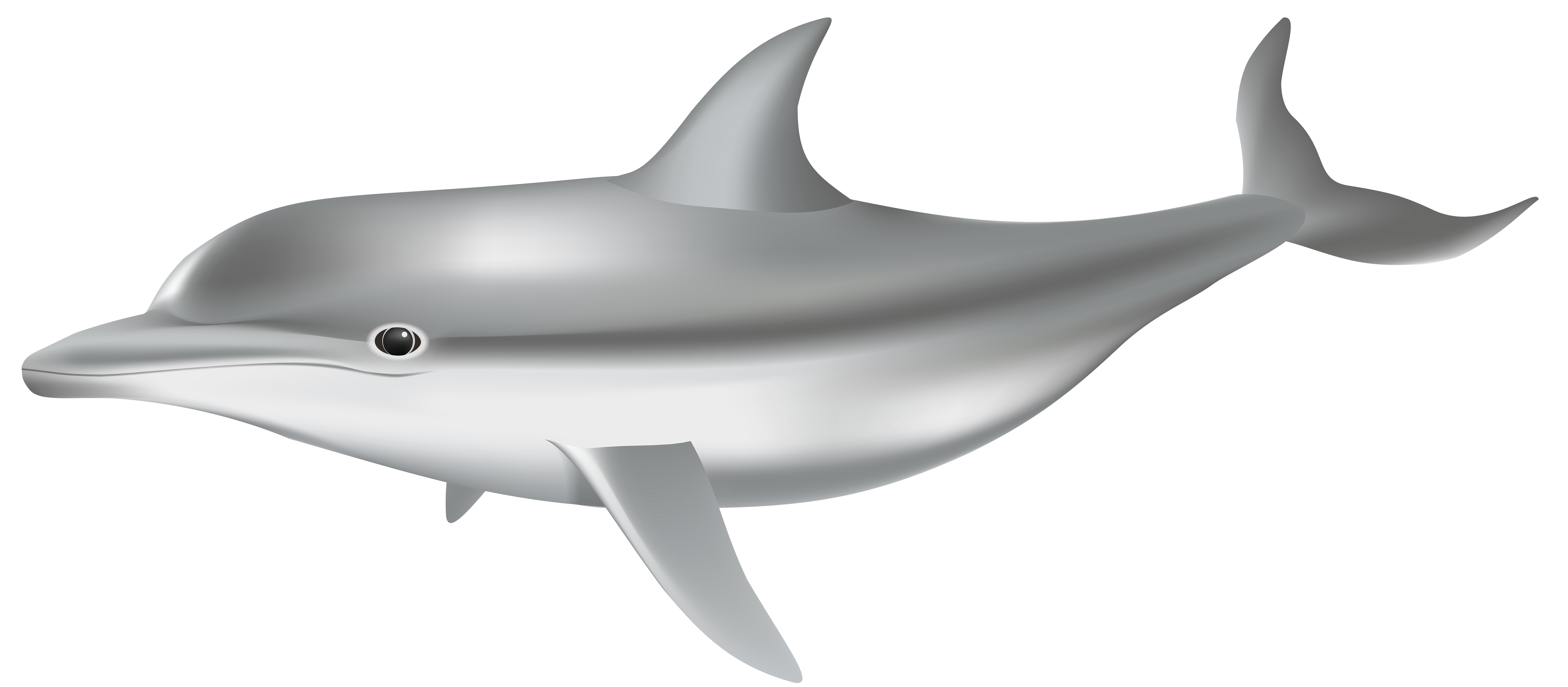 Dolphin png transparent image. Clipart shark clip art