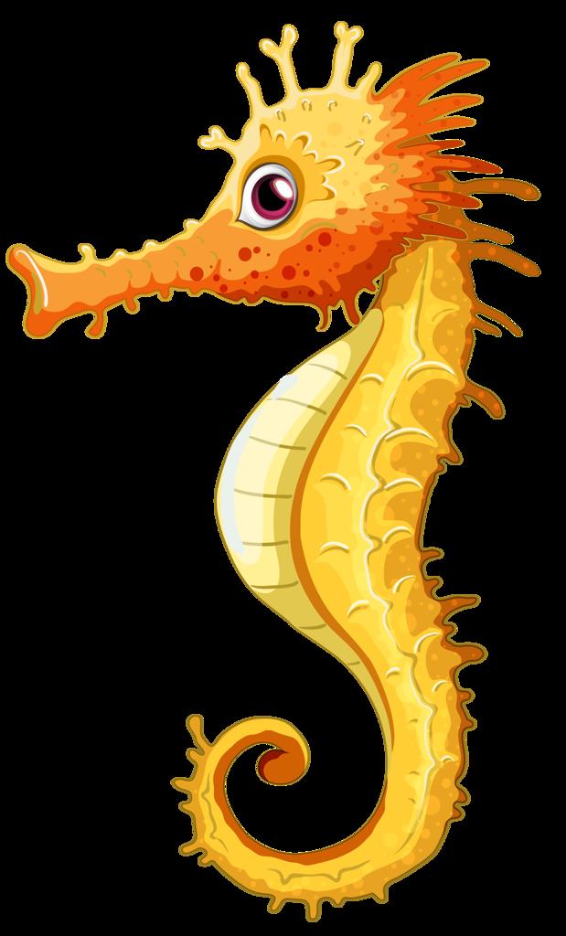 Shell clipart sea horse.  png pinterest clip