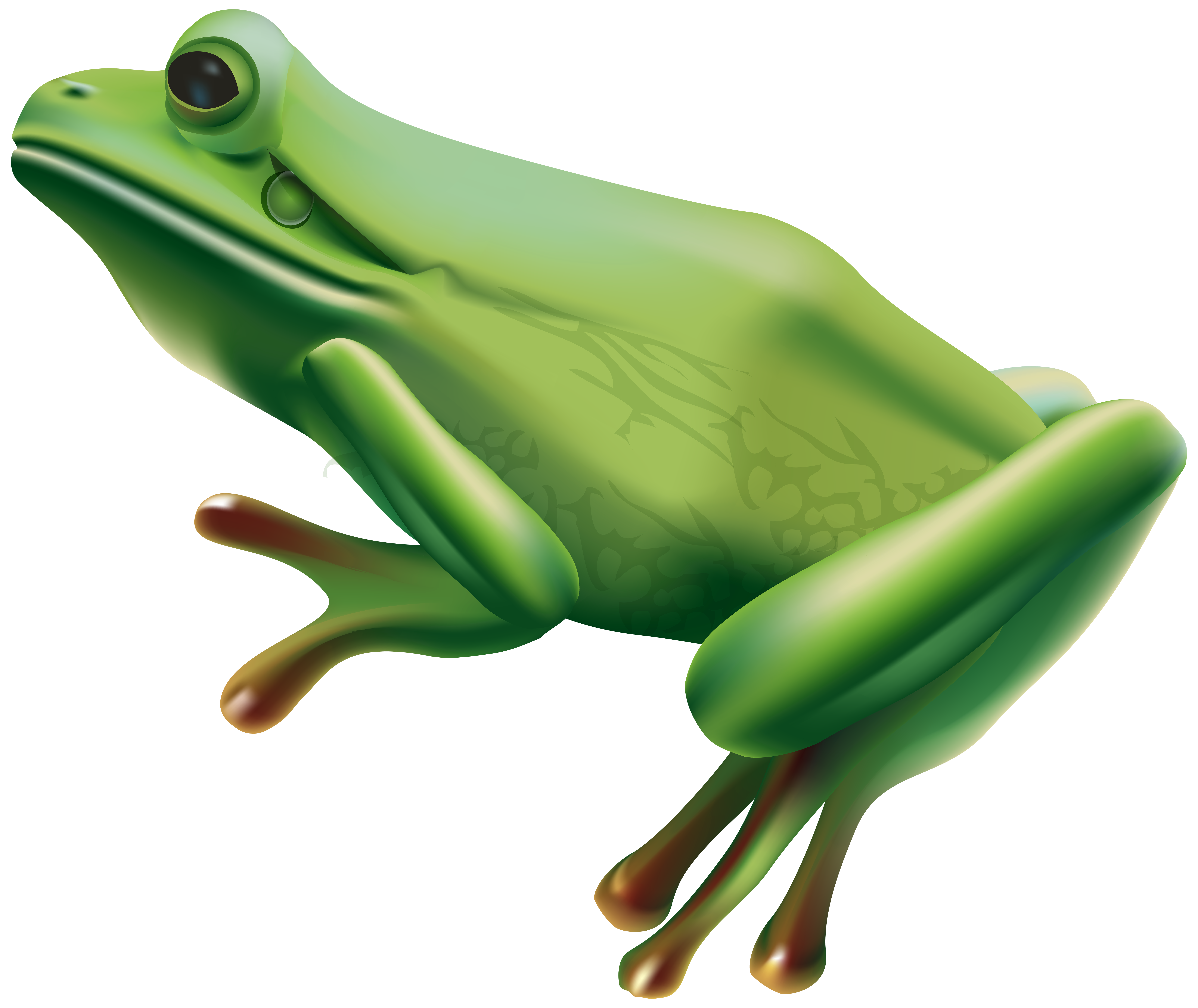 Png transparent clip art. Toad clipart colorful frog