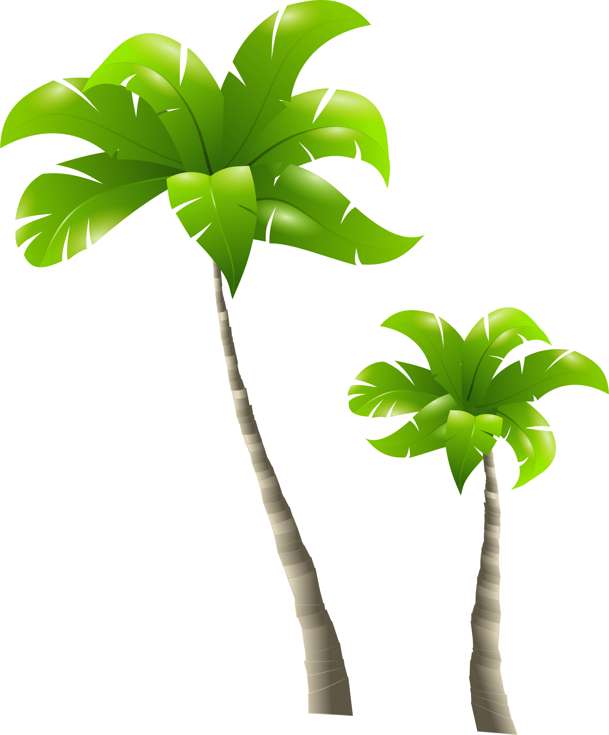 Tall clipart alto. Palm trees palmiers big