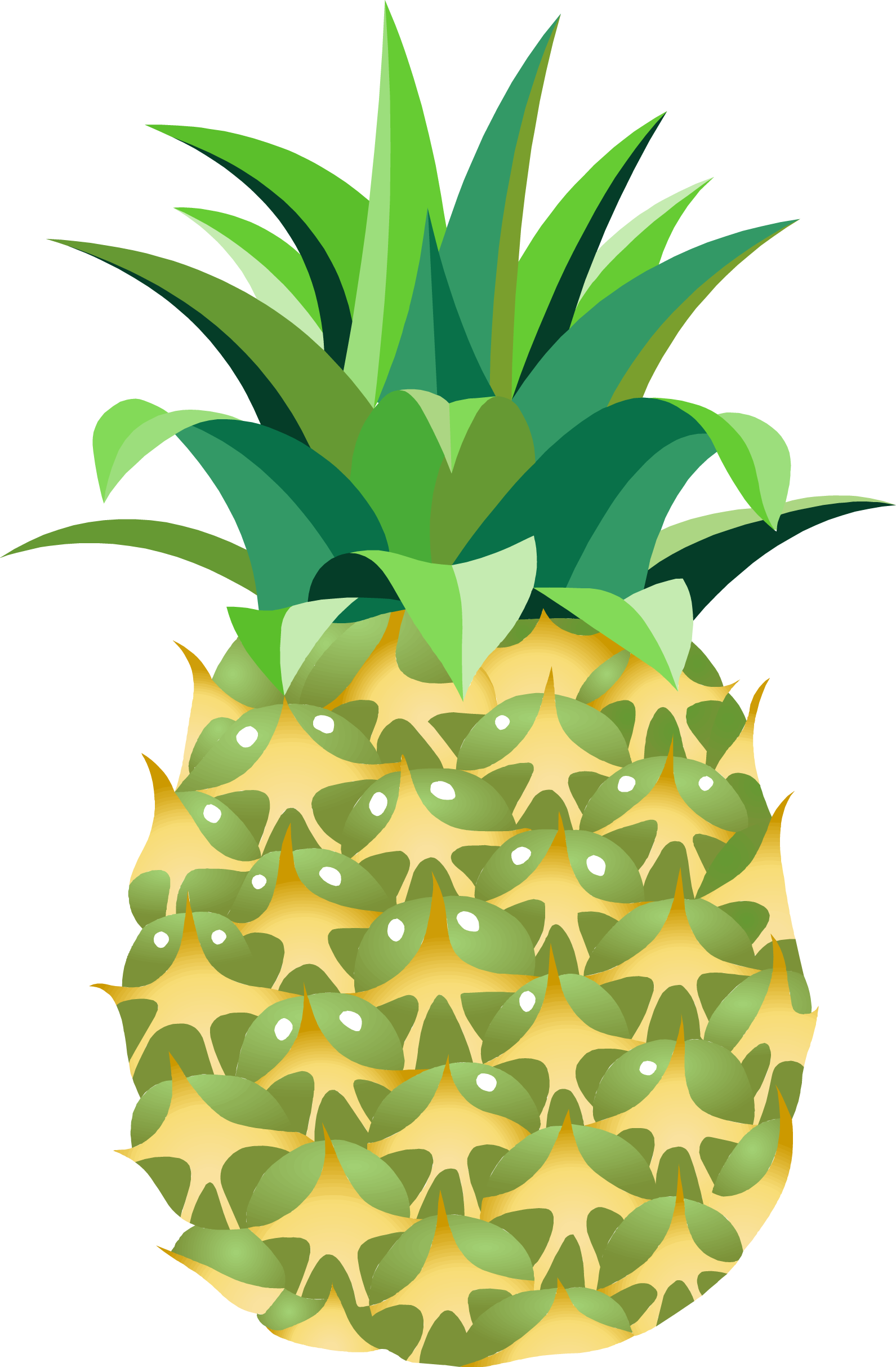 Fourteen isolated stock photo. Leaf clipart pineapple