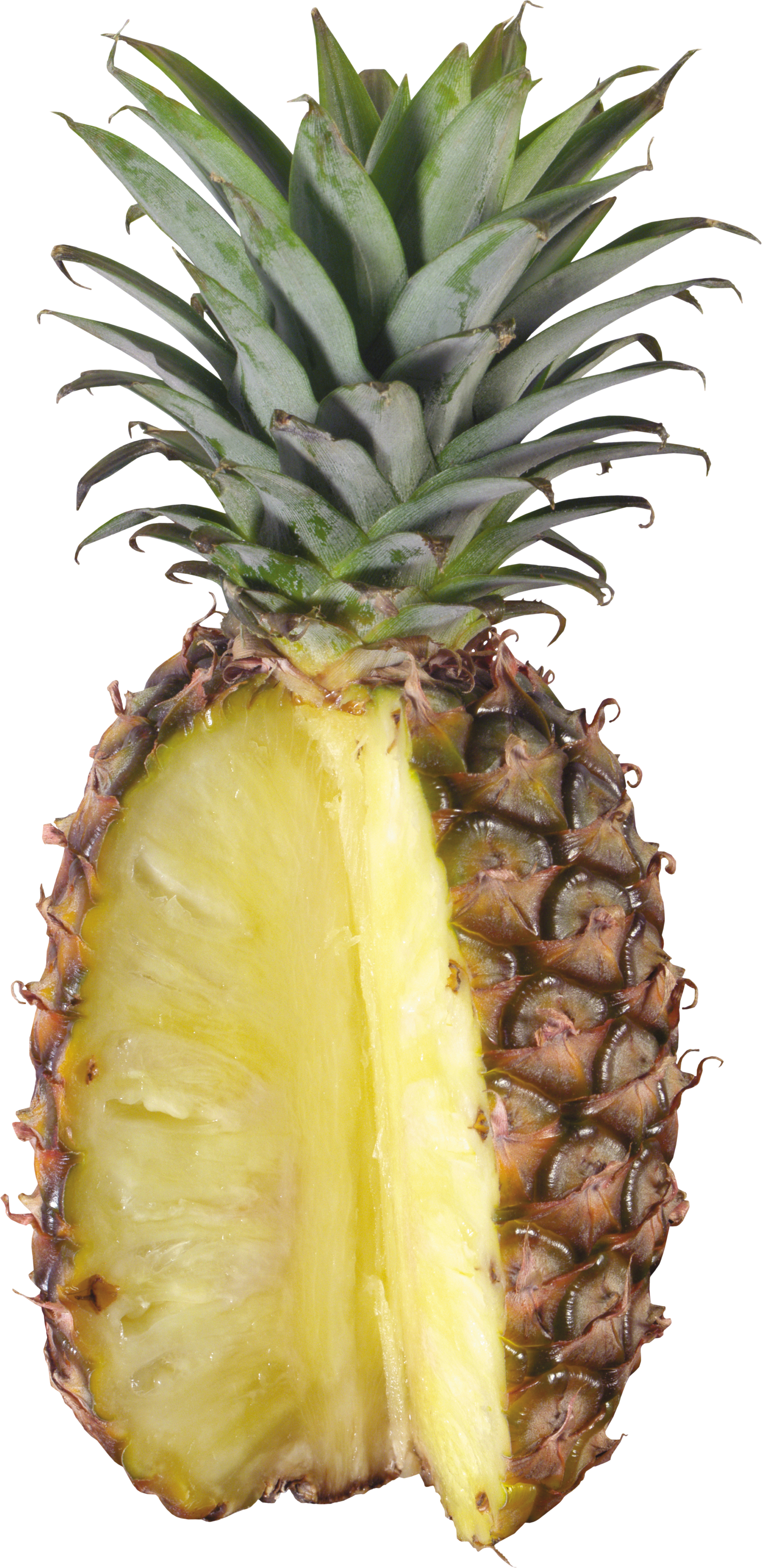Pineapple clipart pineaplle. Thirty one isolated stock