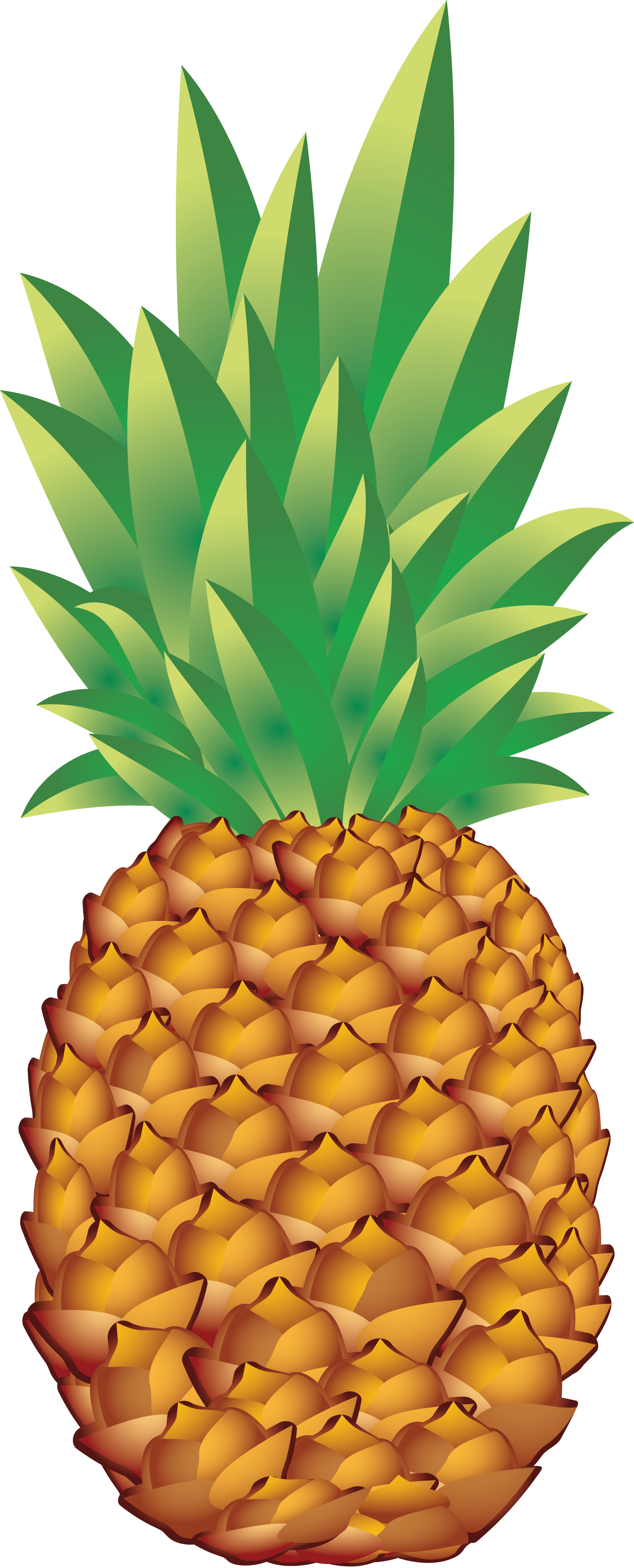 Thirteen isolated stock photo. Pineapple clipart flower