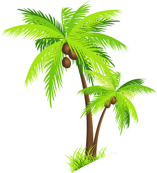 Palm tree with coconuts. Coconut clipart drawn