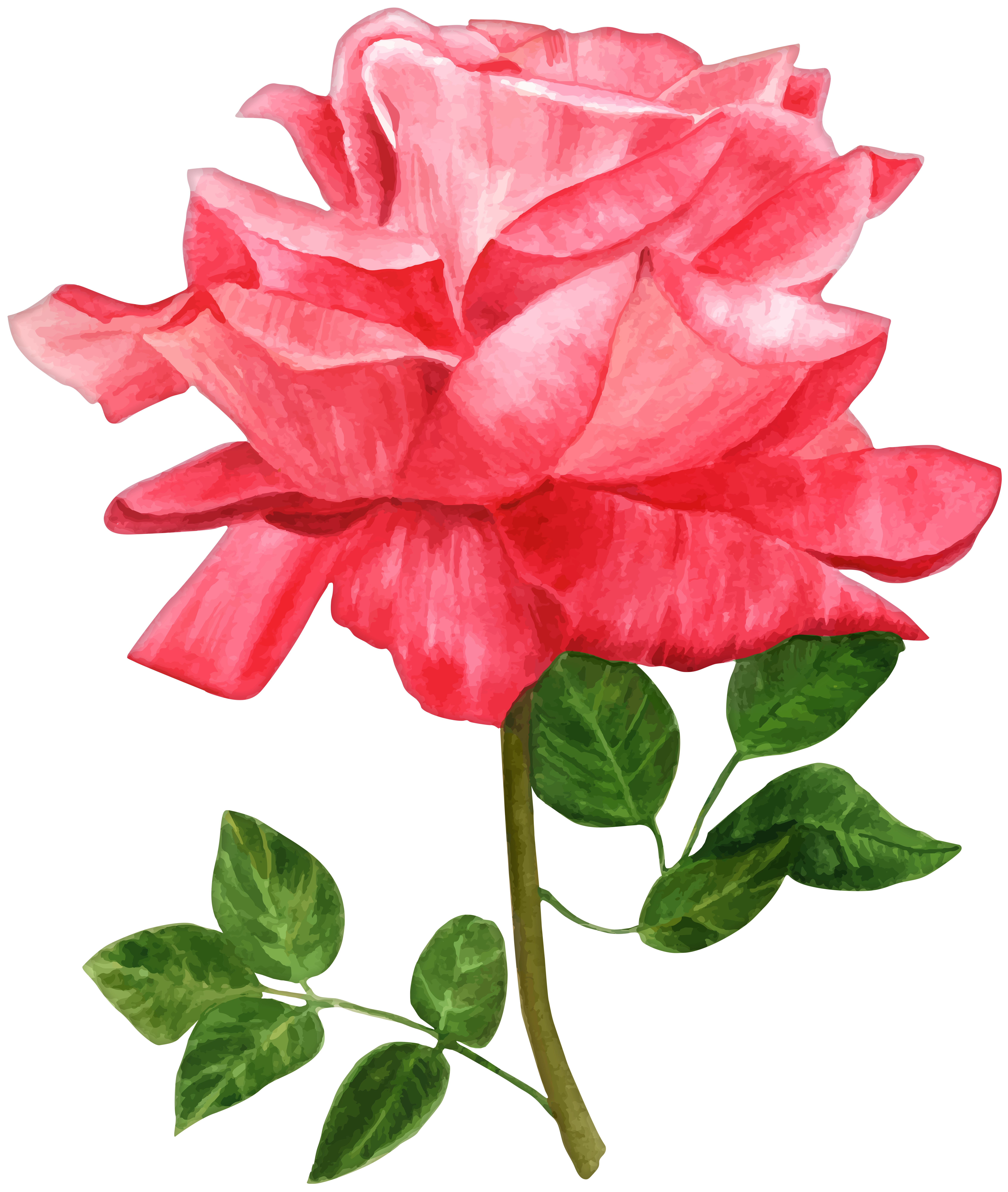 Watercolor flower png. Rose clip art image