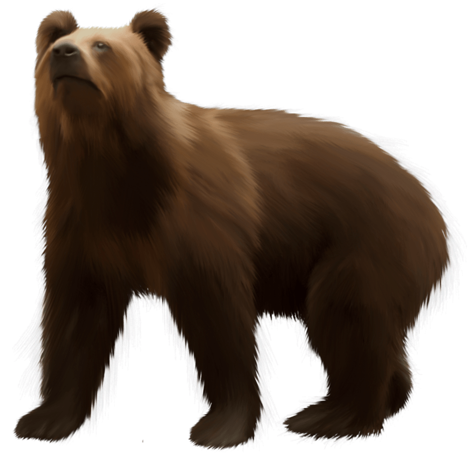 Png clip art best. Clipart bear brown bear