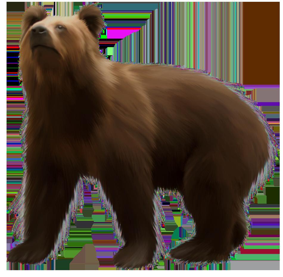 Clipart bear carnivore. Brown png clip art