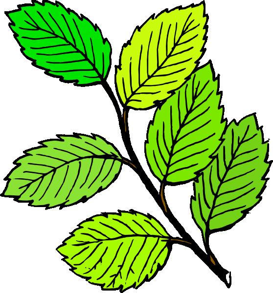 Leaf clipart birch tree. Taiga animals biome carnivores