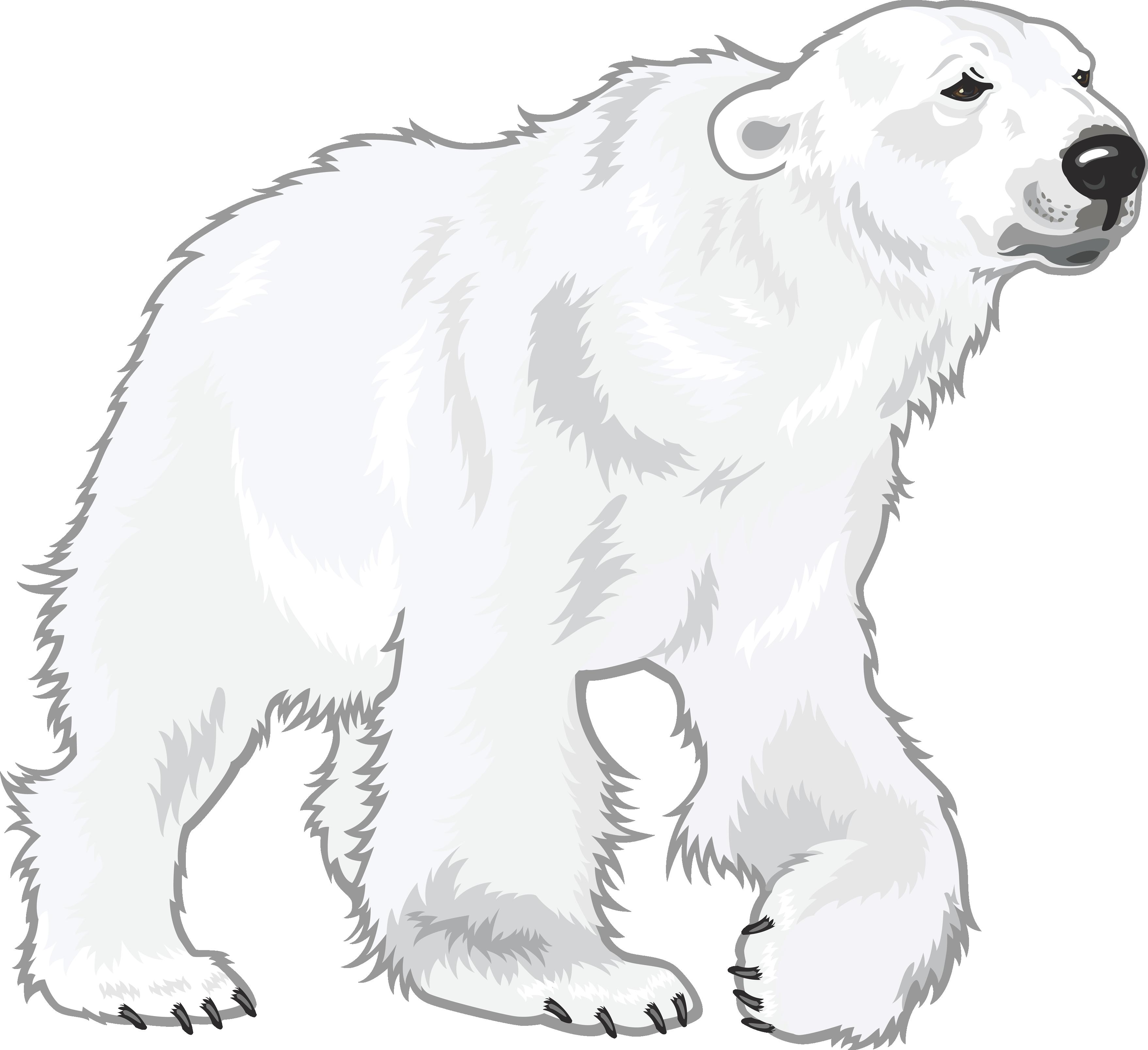 Clipart bear omnivores. Polar white png