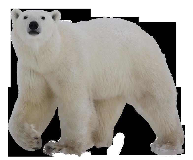 Clipart bear polar bear. Icon web icons png