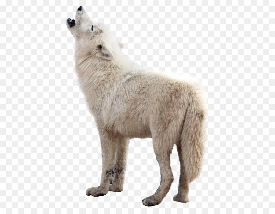 Polar cartoon wildlife wolf. Wolves clipart bear