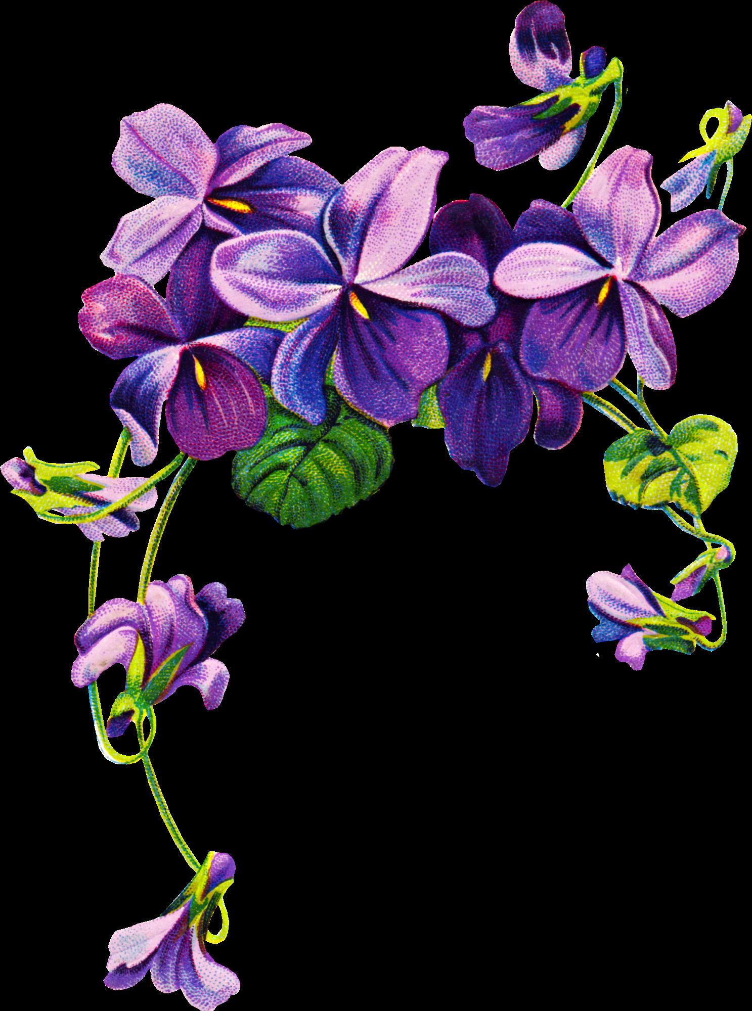 Violets vintage tatoo pinterest. Clipart mountain flower