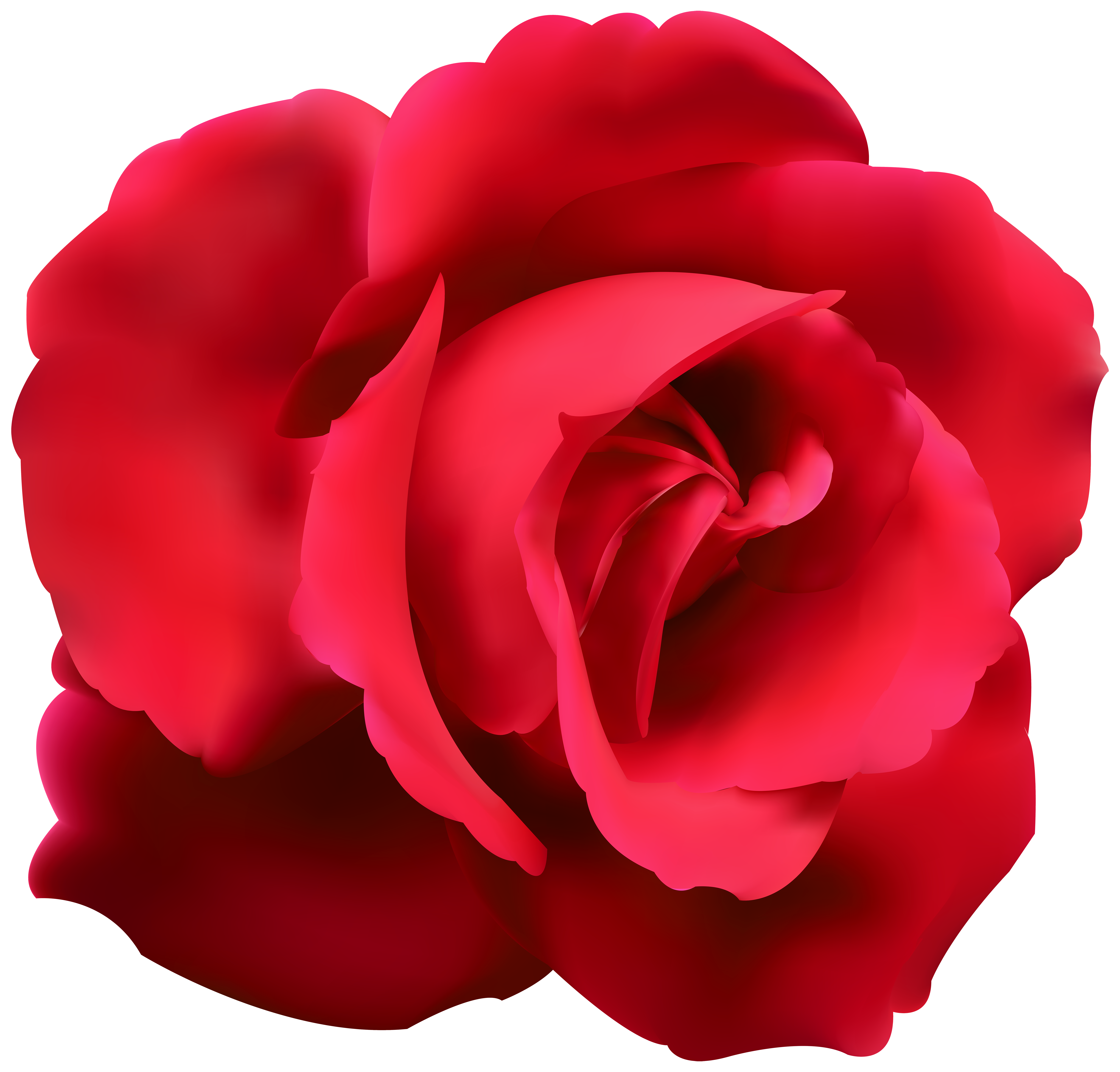 Clipart roses bed. Red rose clip art