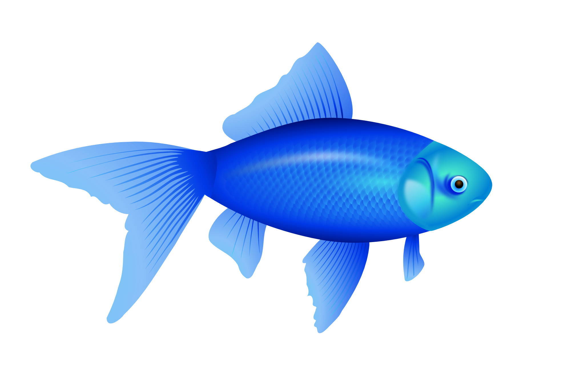 Tuna clipart fish gill. Page