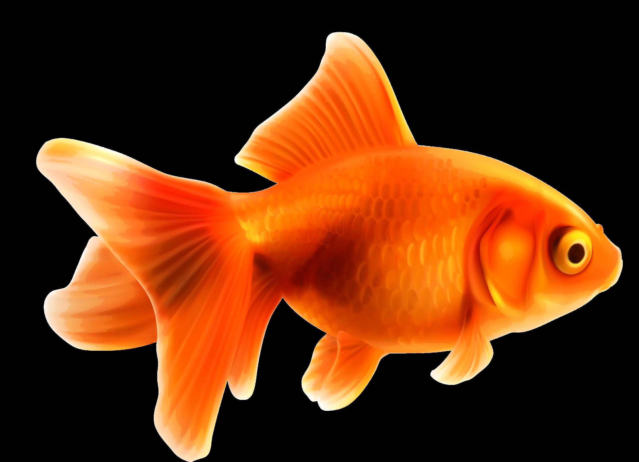 png pinterest party. Goldfish clipart part