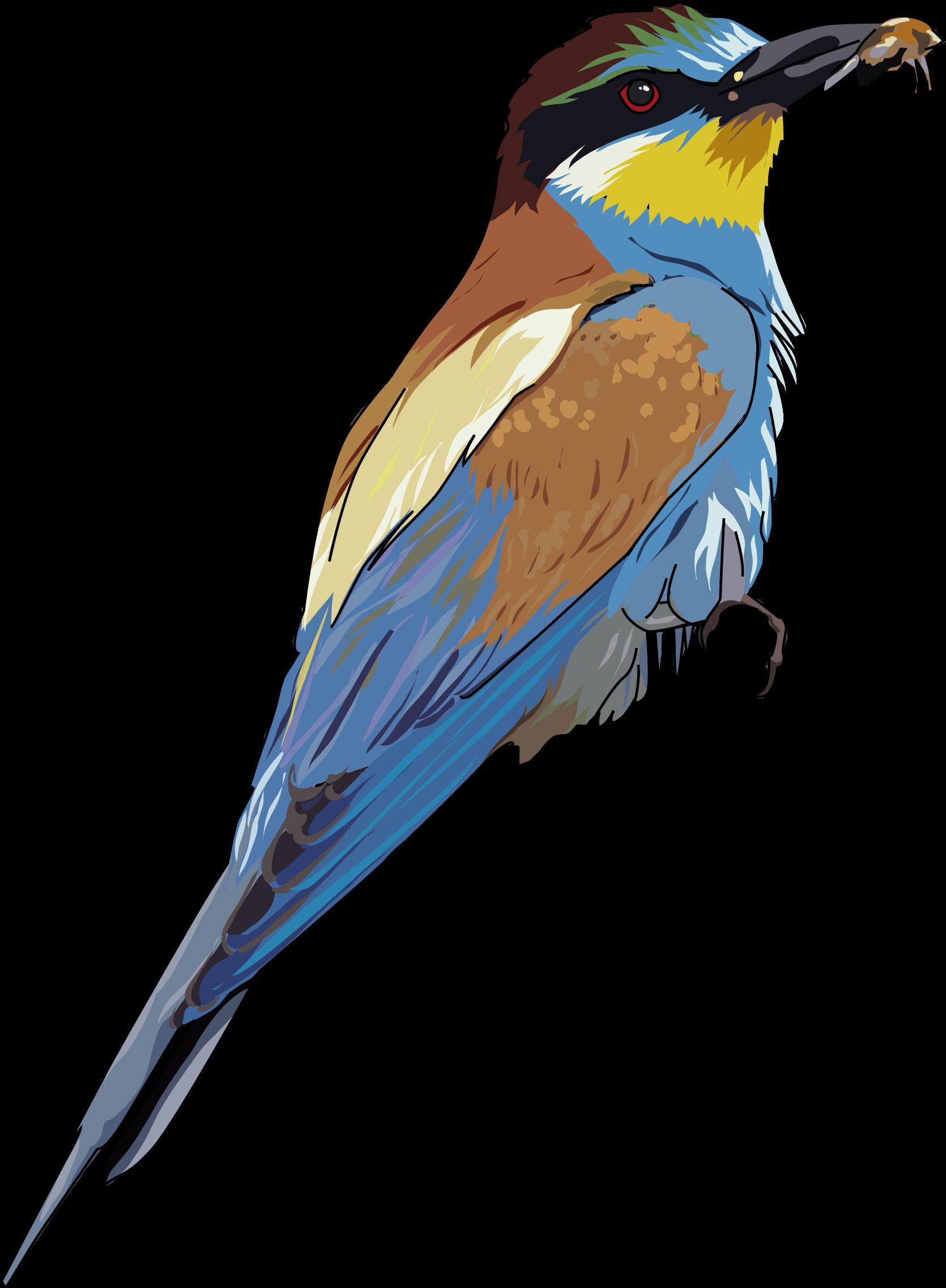 Clipart birds bee. European eater big image