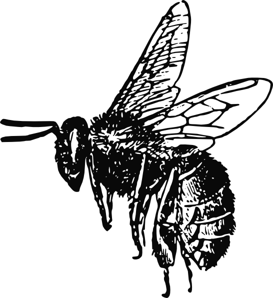 Clipart bee black and white. Clip art at clker