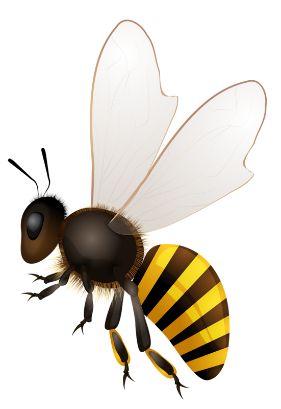 Insect clipart honey bee. Abeilles abeja abelha png