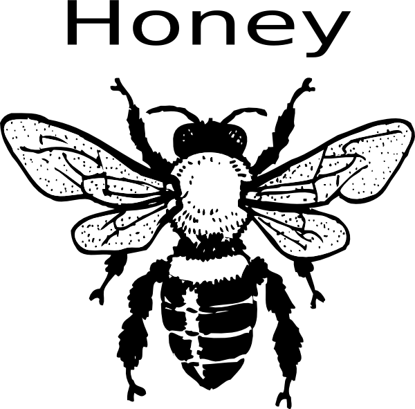 Clip art at clker. Insect clipart honey bee