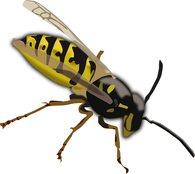 Facts for kids cool. Hornet clipart wasp nest