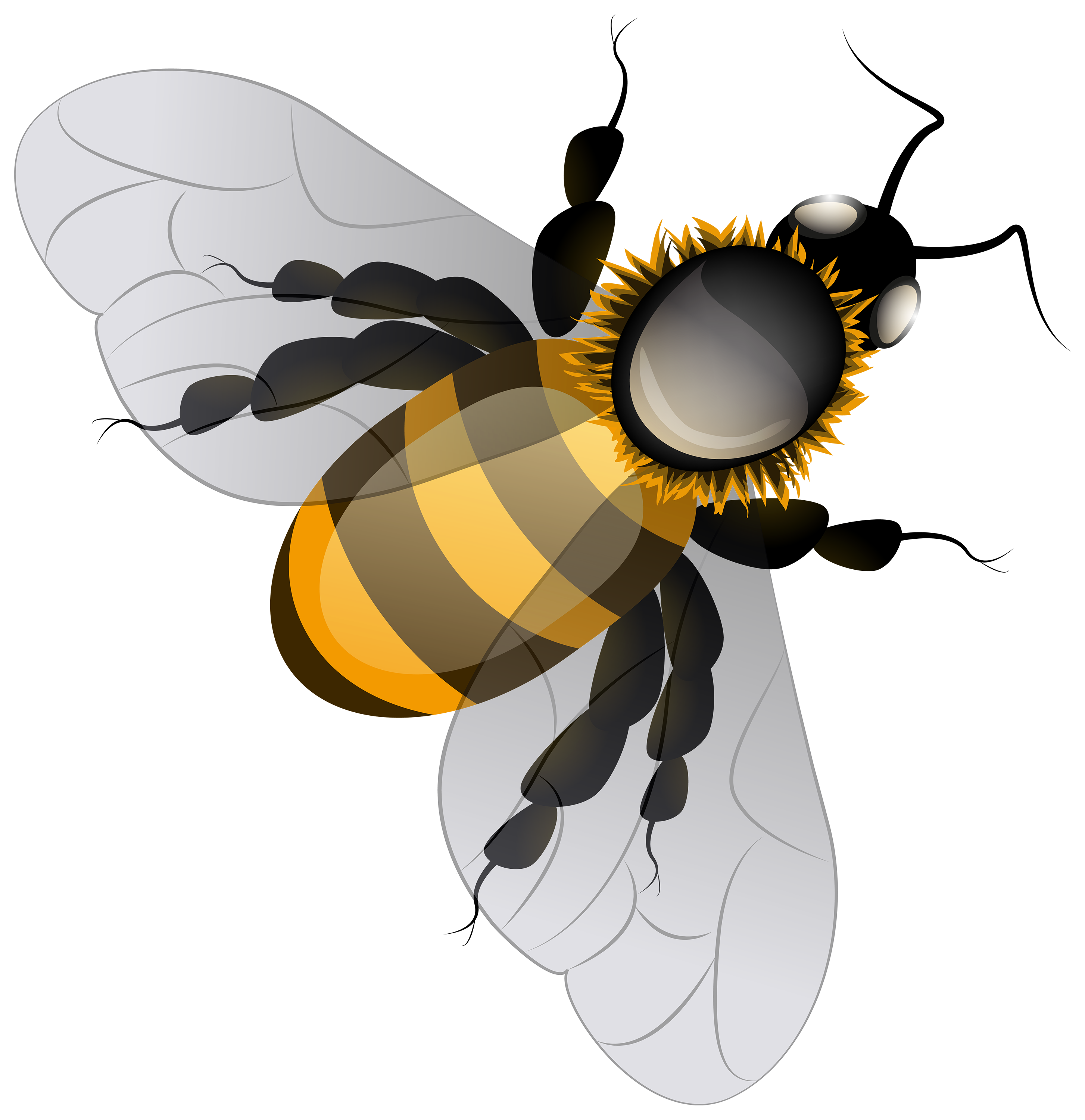 Bee png clip art. Name clipart insect