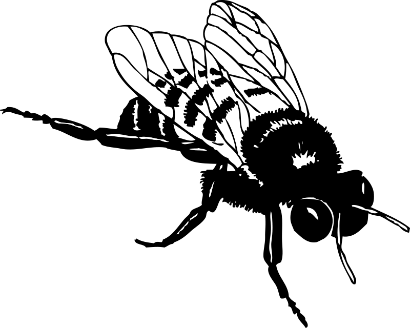 Fly clipart black and white. Bee free stock photo