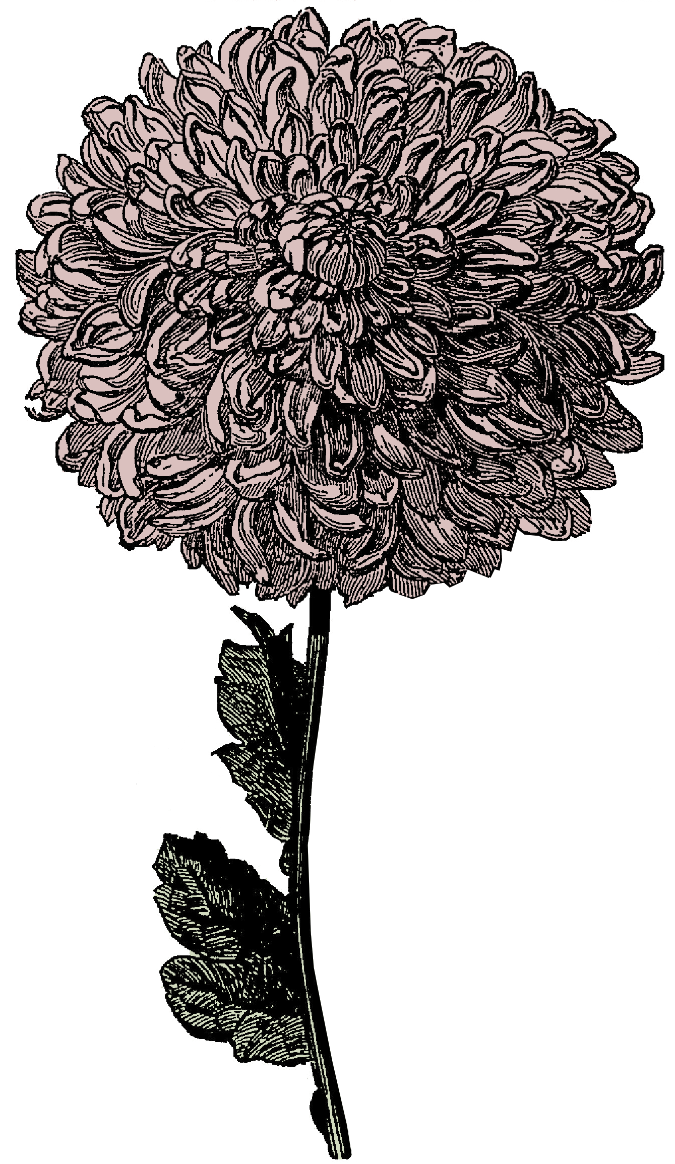 In this free victorian. Hill clipart flower