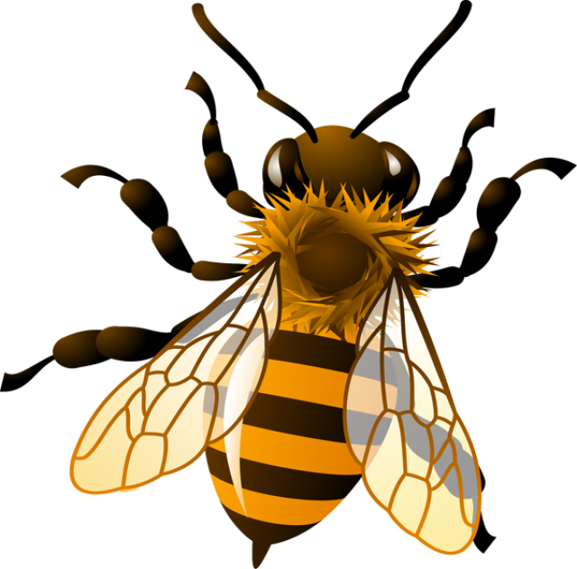 Honey pencil and in. Clipart bee vintage
