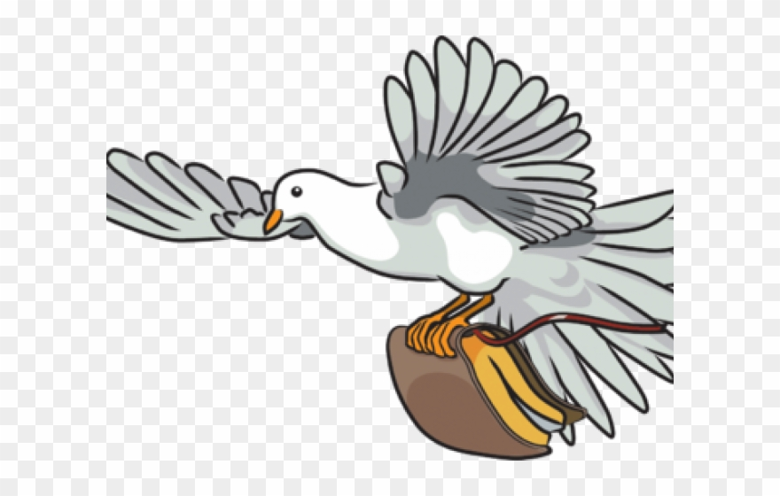 Pigeon clipart bible. Turtle dove on png