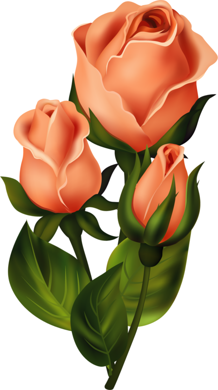 Roses pink roze rosa. Florida clipart orange blossom