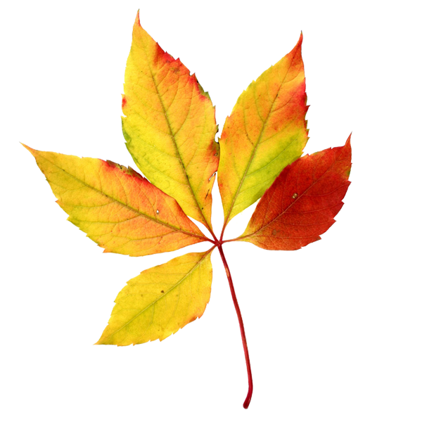 All about the fall. Woodland clipart foliage