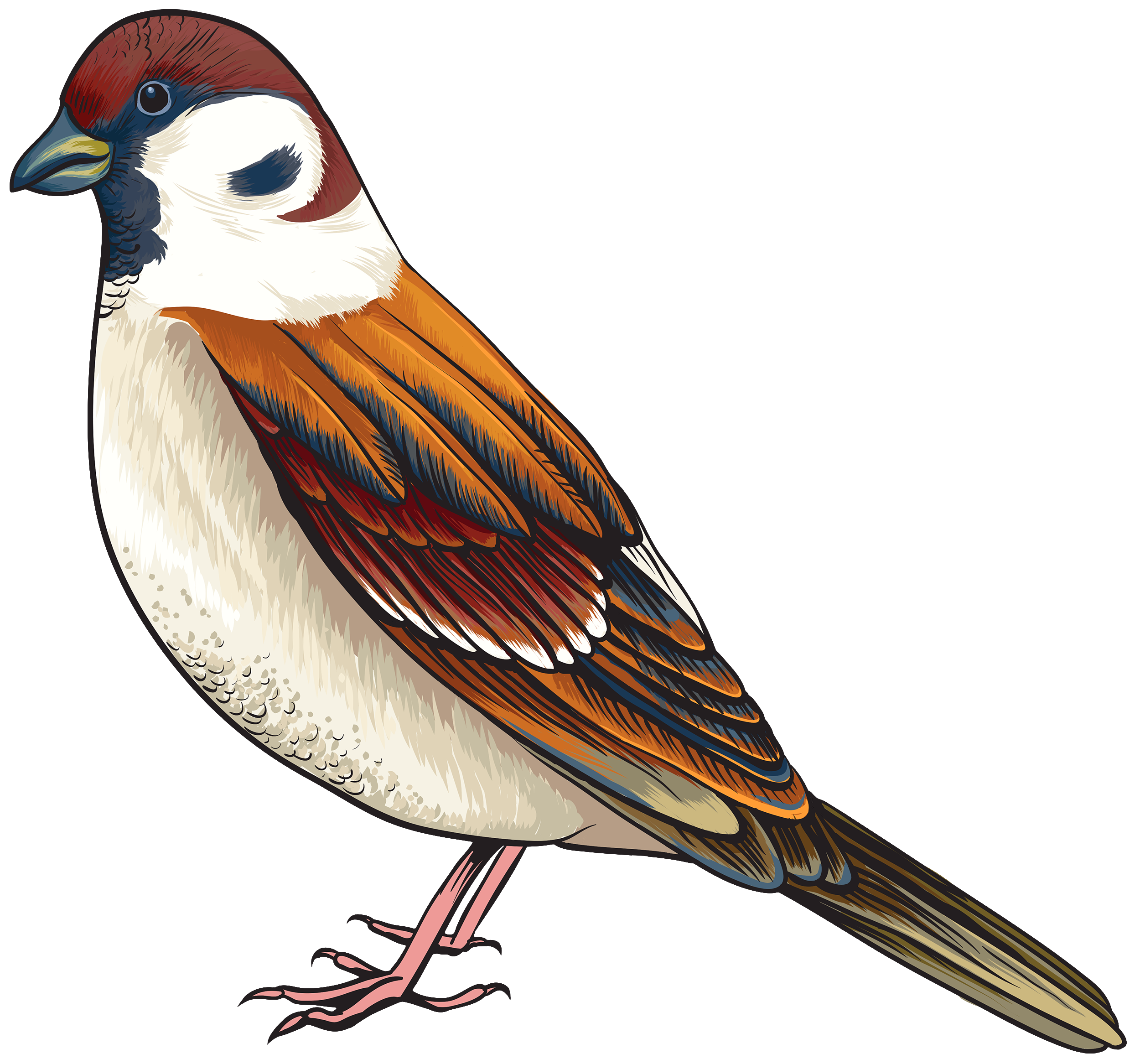 Worm clipart realistic. Bird png best web