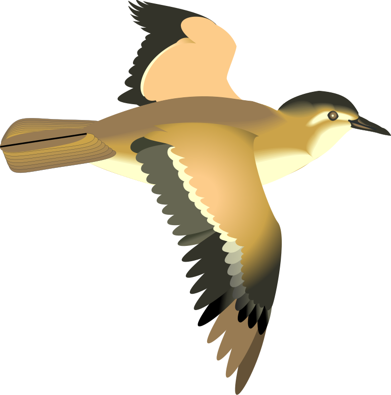 Clipart bird animated. Sea pencil and in